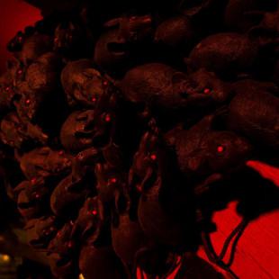 A Plague Tale révèle un peu plus du voyage d'Amicia et Hugo